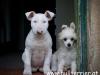 Zachary (9 Wochen) und Batida de Coco (11 Woche)
