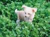 Hyper Cute Pinky Twinky - 11. Woche