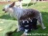 D-Wurf (4 Wochen) an der Milchbar