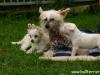 Ingrid, Winja und S-Welpe
