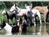 Hundemix-am-Wasser