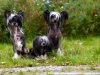 Shadow, Minnie und Pia