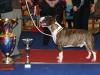 bei der Hauck Memorial Trophy Schau 2012