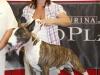 bei CACIB Oberwart 2010 - Bester Jugendhund der Gruppe III 1. Platz
