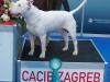 Smiley - CACIB Zagreb 2015