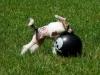 11 Wochen - beim Ballspielen