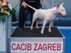 Rugby - CACIB Zagreb 2015
