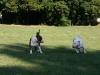 Laureola's Samy und Laureola's Rugby